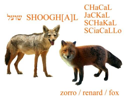 Jackal_fox